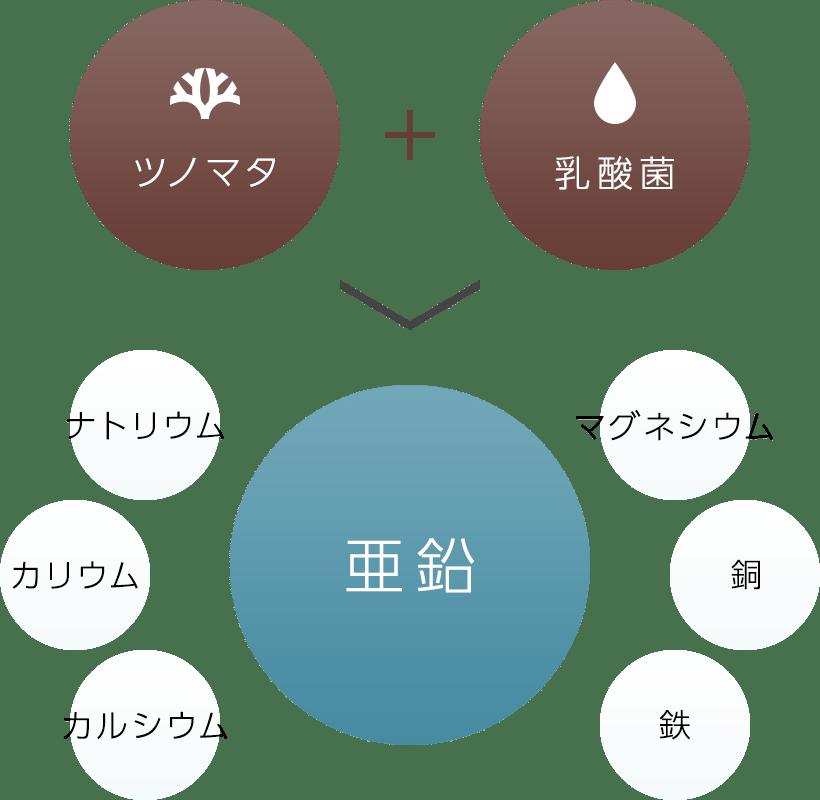 日本初!次世代成分ツノマタ乳酸菌発酵液配合 亜鉛